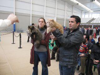 Sibaritas Cattery - Gatos Exóticos y Persas - Pilar de la Horadada